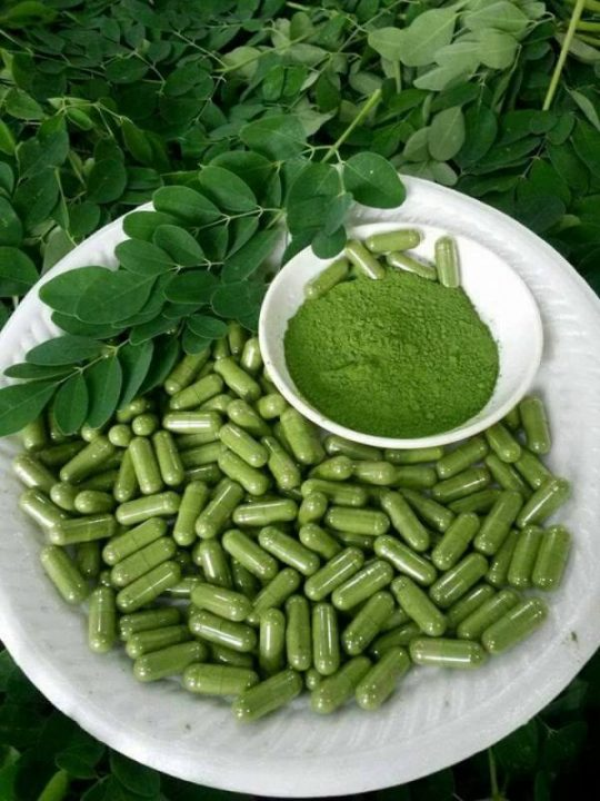 moringa capsules,drumstick tree,moringa benefits